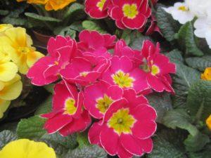flowers coloring the world Luvli GummiWerks